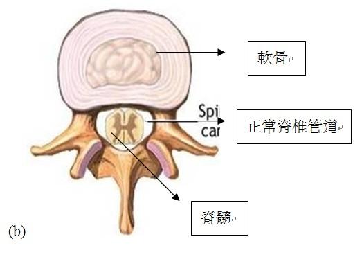 脊椎管道的結構